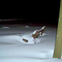 Занесённые снегом... :: Miko Baltiyskiy