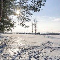 Солнечный февральский день :: Анатолий Клепешнёв