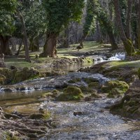 сказочный лес в Ифране :: Светлана marokkanka