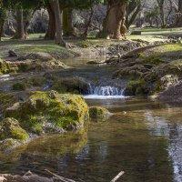 Лес в Ифране :: Светлана marokkanka