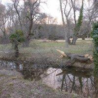 Заброшенный парк :: Светлана marokkanka