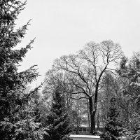 В зимнем парке :: Fededuard Винтанюк