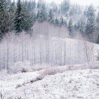 Зима :: Alena Nuke
