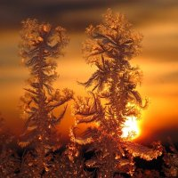 Ледяная жара :: Юлия Лохова