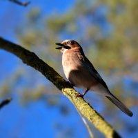 в ожидании весны :: linnud