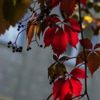Осенние листья :: Valentina M.