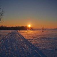 лыжня :: Седа Ковтун