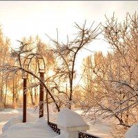 Зимний день. :: Марина Никулина