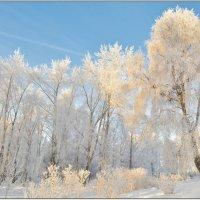 Мороз и солнце;День чудесный! :: Марина Никулина