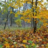 Про осень :: Милешкин Владимир Алексеевич