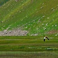 Приток Ойгаинга. h ~ 3300-3400м. :: Виктор Осипчук