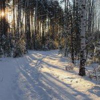 Морозных дней подарки февраля... :: Лесо-Вед (Баранов)