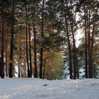 Сосновый лес :: Олег Афанасьевич Сергеев