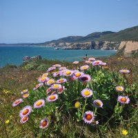 весеннее побережье  океана :: viton