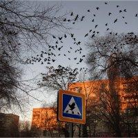 Господа вновьприбывшие рассаживайтесь, мест всем хватит, свадьба начинается!!! :: Anatol Livtsov