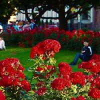Розы для Исаакия... :: Sergey Gordoff