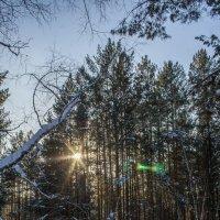В морозном лесу :: Дмитрий Костоусов