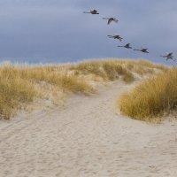 Над дюнами. :: Виталий Латышонок
