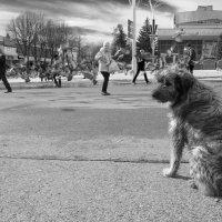 Человек? Собака? :: Алексей Окунеев