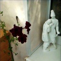 Петуния на балконе :: Нина Корешкова