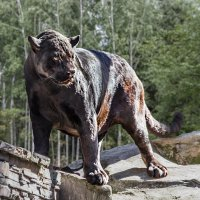Чёрный ягуар :: Nn semonov_nn