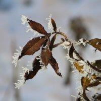 Тонкая работа мороза :: Татьяна Смоляниченко