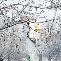 Зимний пейзаж :: Руслан Тимошенко