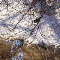 Так что ли скоро весна? :: Татьяна Ломтева