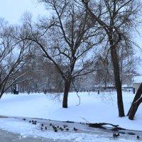Утки на льду. :: zoja