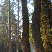 Нав лесу :: Александр Попков