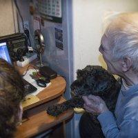 Разговор с внучкой по Скайпу... :: сергей адольфович