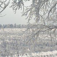 Это зима :: Настя Масловская