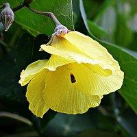 Цветок после дождя :: Асылбек Айманов