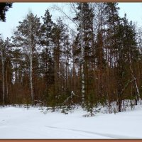 Смешанный лес - не дубовая роща. :: Мила Бовкун