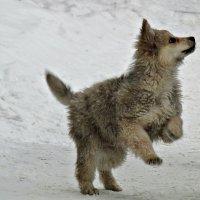 Уличный щенок :: наталия