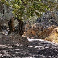 Ущелье Agias Irini (св. Ирины), Крит :: Владимир Брагилевский