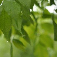 После дождя :: мария корбут