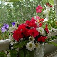 Цветы на балконе :: татьяна