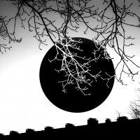 Зимнее солнце :: Валерий Розенталь
