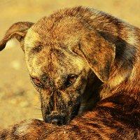 Балийский пляжный пес :: Асылбек Айманов