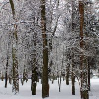 В зимнем парке  царство сна. :: Валентина ツ ღ✿ღ