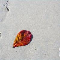 Пляжный натюрморт :: Светлана Тремасова