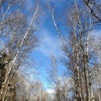 Какое небо голубое :: marmorozov Морозова