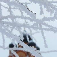 Зимние пейзажи... :: Анна Шишалова
