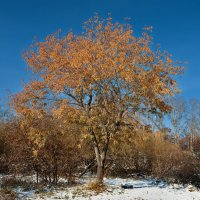 Осенние листья... :: Анатолий Иргл