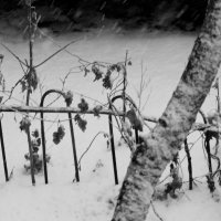 Судьбы безмолвное молчанье... :: Валерия  Полещикова