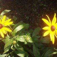 Солнечная парочка... :: марина ковшова