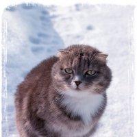 Снимай, не проходи мимо! :: Елена Миронова