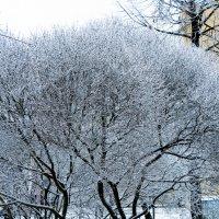 Зимние деревья :: Екатерина Харитонова