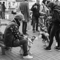 Воскресные прогулки с детьми и собаками :: Sofia Rakitskaia